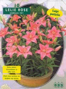 Lelie Lilium Pink
