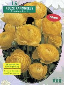 Ranonkel Ranonkel Yellow
