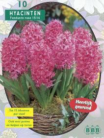 Hyacint Hyacinth Fondante