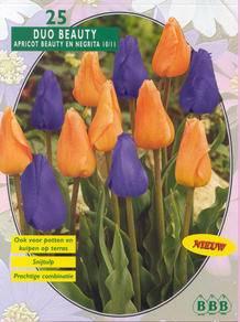 Tulp Tulipa Beauty Mix Apricot Beauty/Negrita