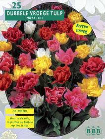 Tulp Tulipa Dubbel Mix