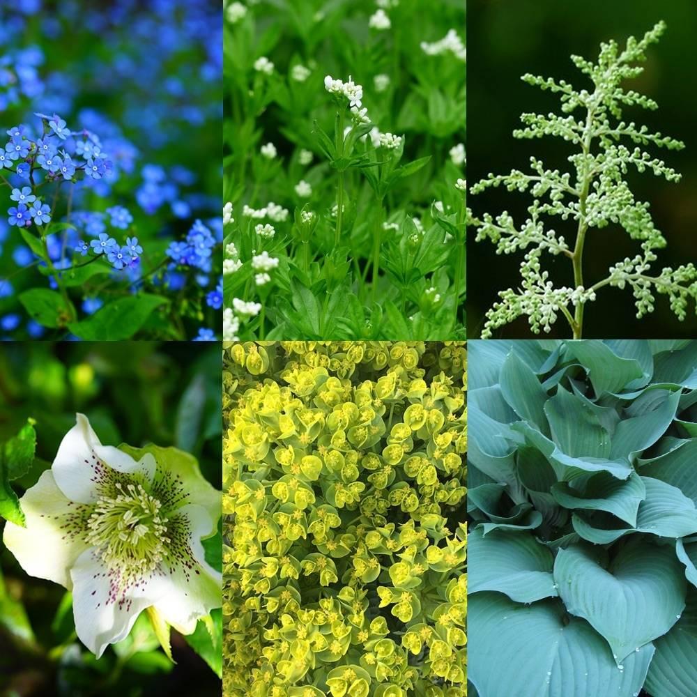 Witte Vaste Planten.Vaste Planten Borderpakket Bomenonline Nl