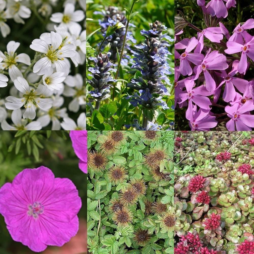 Borderpakket bodembedekkend Bodembedekkende vaste planten
