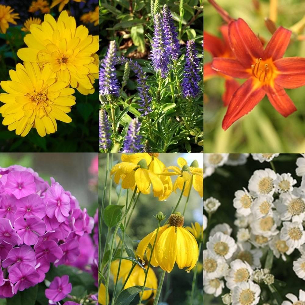 Borderpakket bonte vaste planten Borderpakket verschillende kleuren