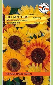 Zonnebloem Helianthus Musicbox Gemengd
