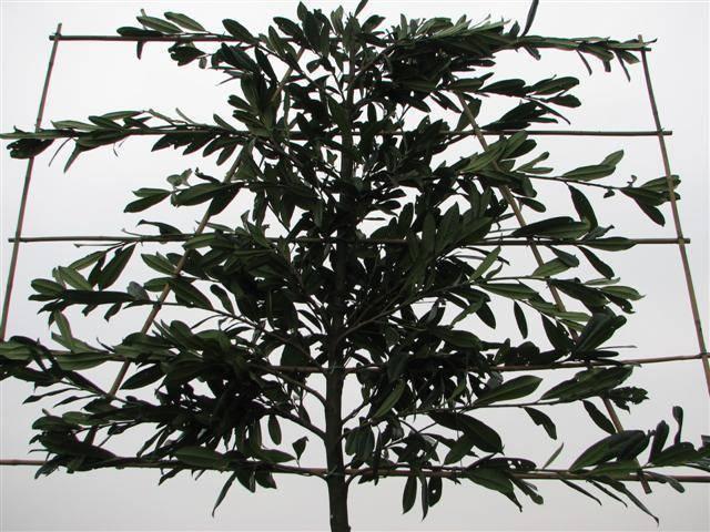 Tuinplanten en Bloembollen   Tuin Winkelcentrum