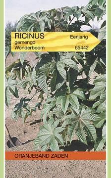 Wonderboom Ricinus communis Gemengd