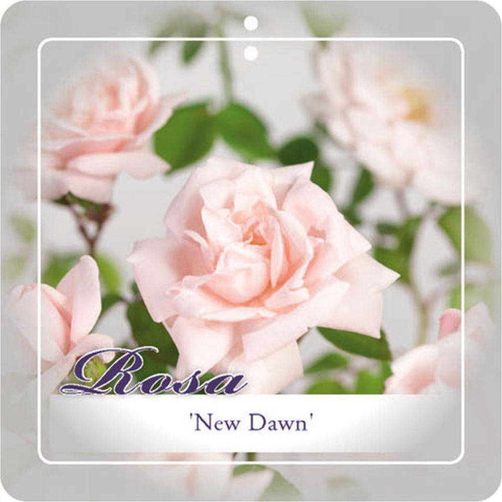 Klimroos Rosa 'New Dawn'