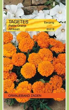 Lage Afrikaan Tagetes Petite Orange